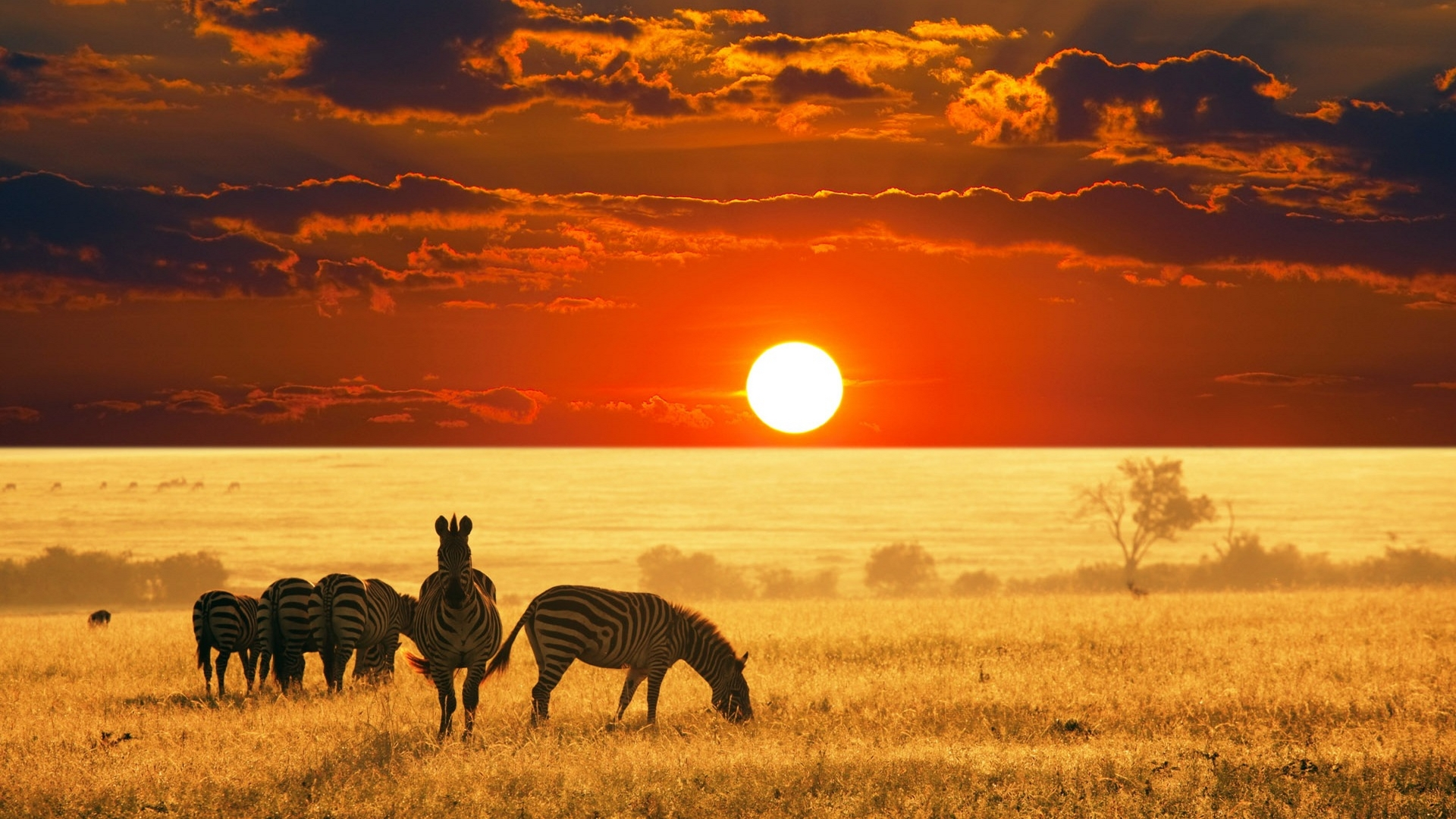Sunset And Zebras Hd Wallpaper - Safari Africa Hd , HD Wallpaper & Backgrounds