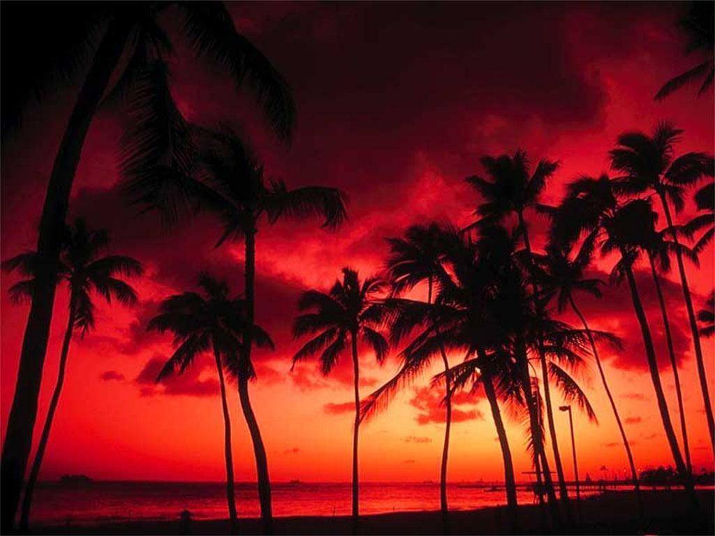 Tropical Beach Wallpaper 054, Free Wallpapers, Free - Sunset Wallpaper Hd Palm Tree , HD Wallpaper & Backgrounds
