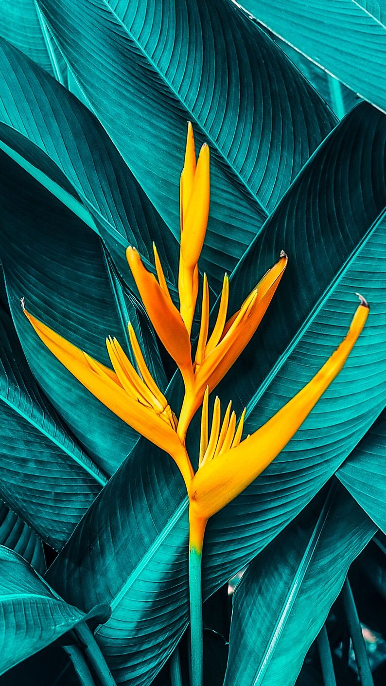 Tropical Foliage &amp - Bird Of Paradise Iphone , HD Wallpaper & Backgrounds