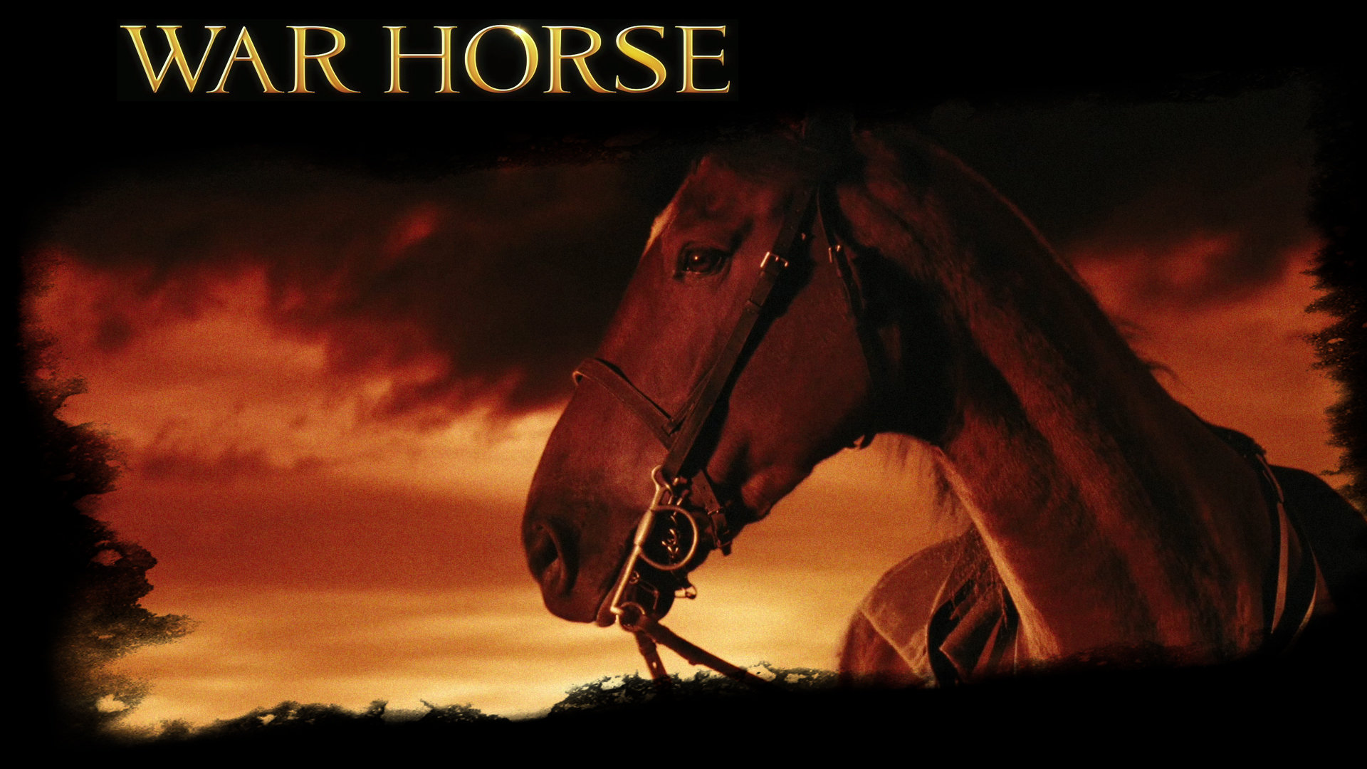 20 War Horse Hd Wallpapers War Horse Movie Hd 1891781 Hd Wallpaper Backgrounds Download