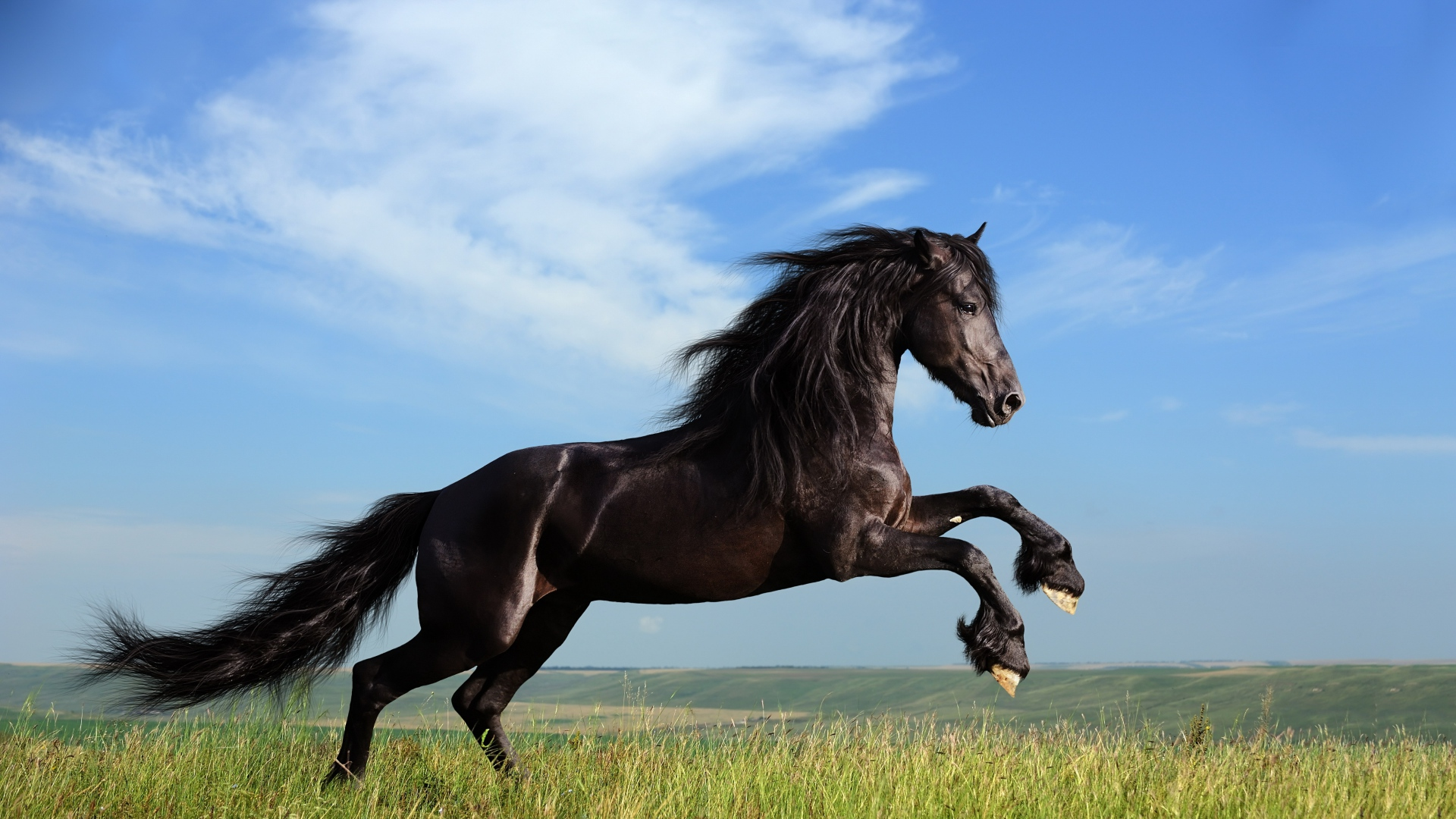 Horse Galloping 1891895 Hd Wallpaper Backgrounds Download