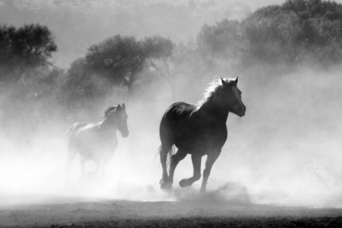 Wild Horse Atmosphere White Black And White Sky Nature