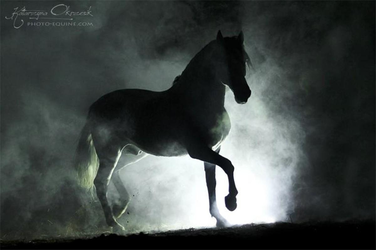 Spanish Stallion Errant Stray Black Horses Andalusian Black Horses Wallpaper Hd 1892306 Hd Wallpaper Backgrounds Download