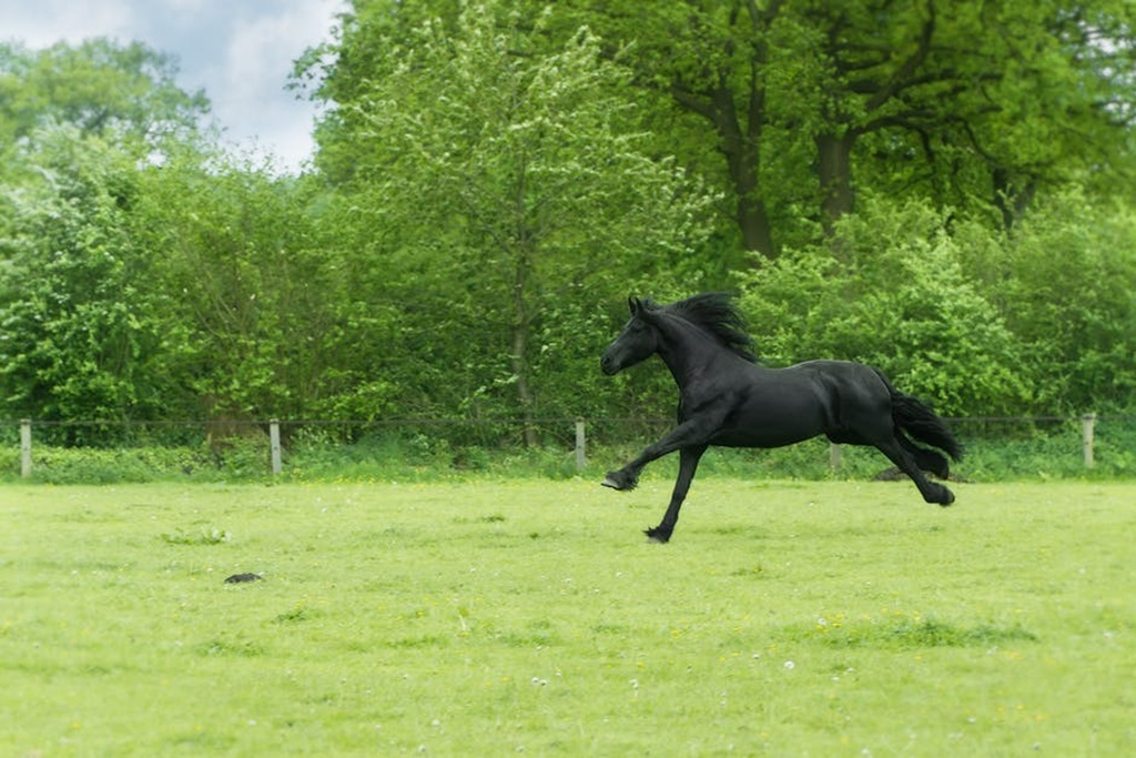 Black Horse Running Hd Wallpapers Black Beauty Horses Quotes 1892415 Hd Wallpaper Backgrounds Download