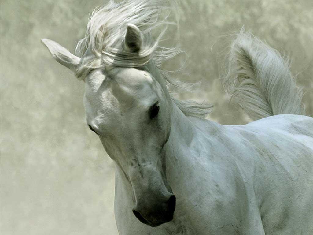 Beautiful Horse 1892454 Hd Wallpaper Backgrounds Download