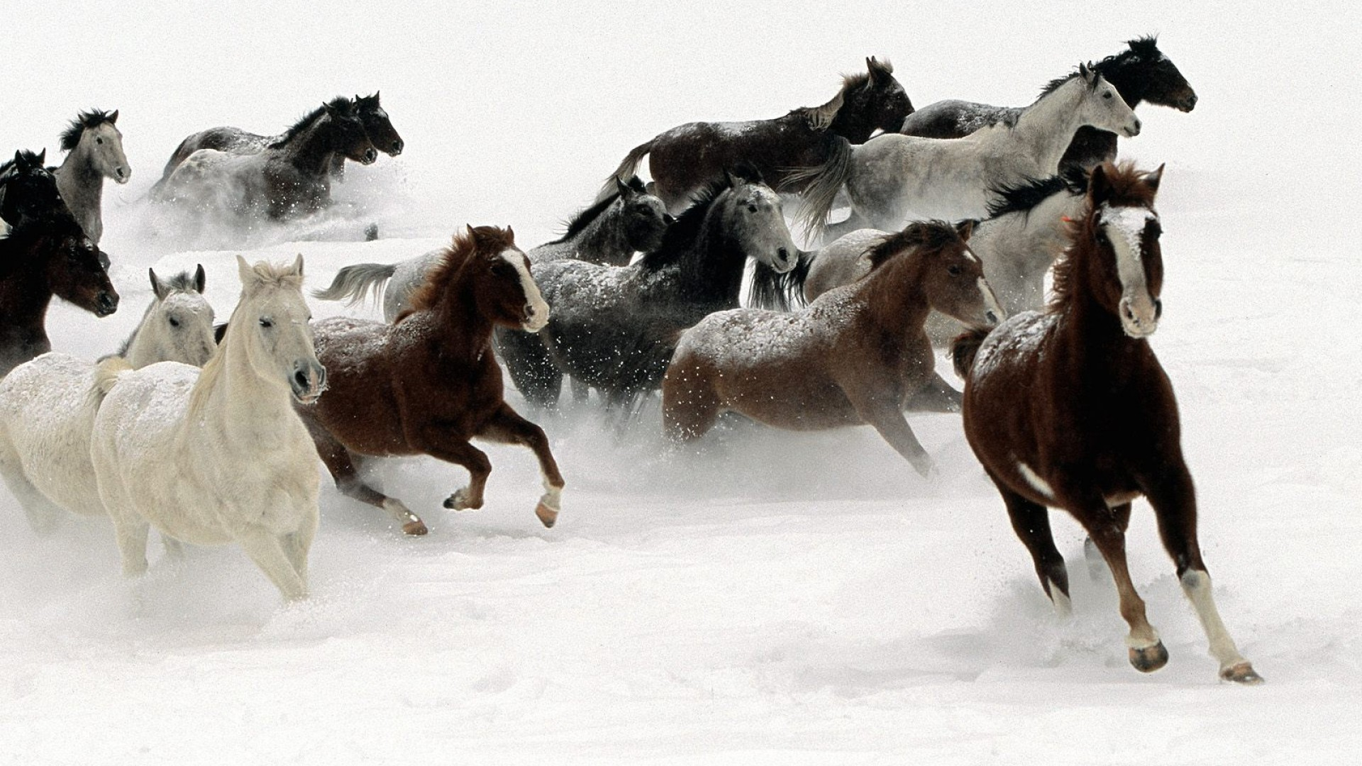 Winter Horses Horse Hd Wallpapers 1080p 1892678 Hd