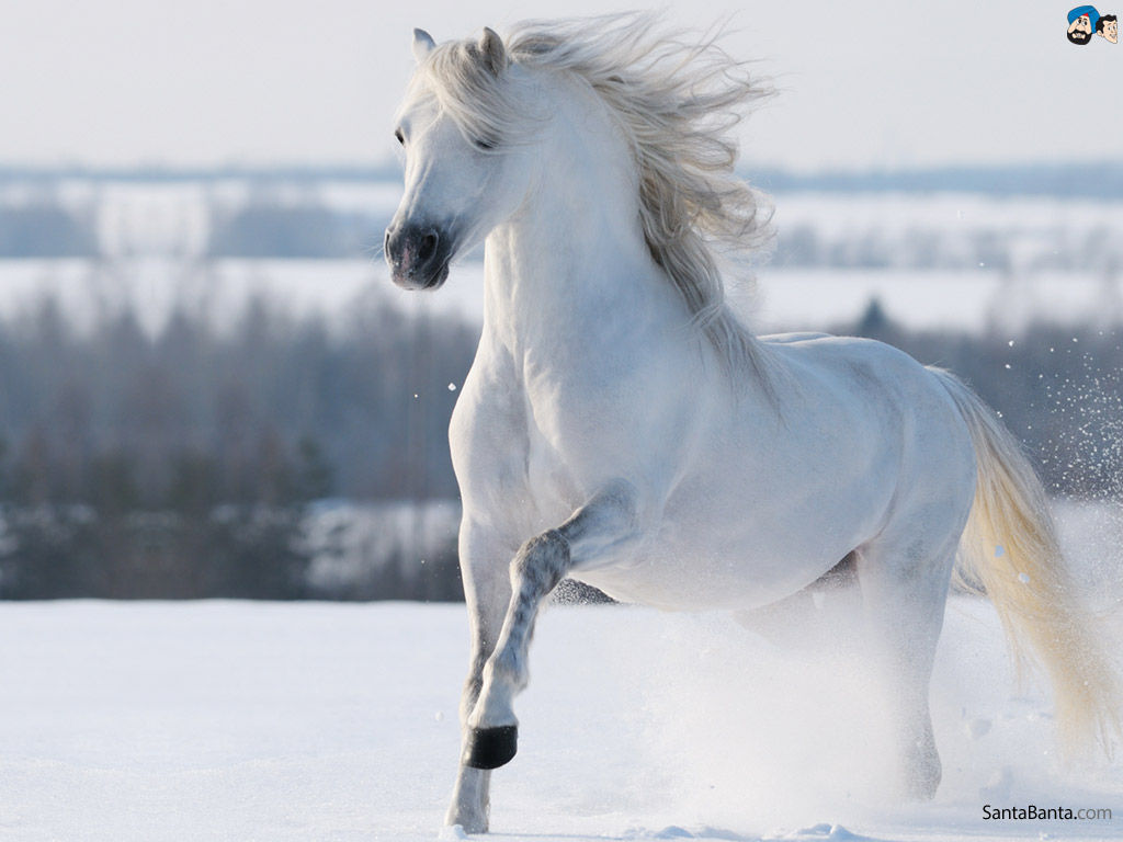 White Horses In Snow 1892723 Hd Wallpaper Backgrounds