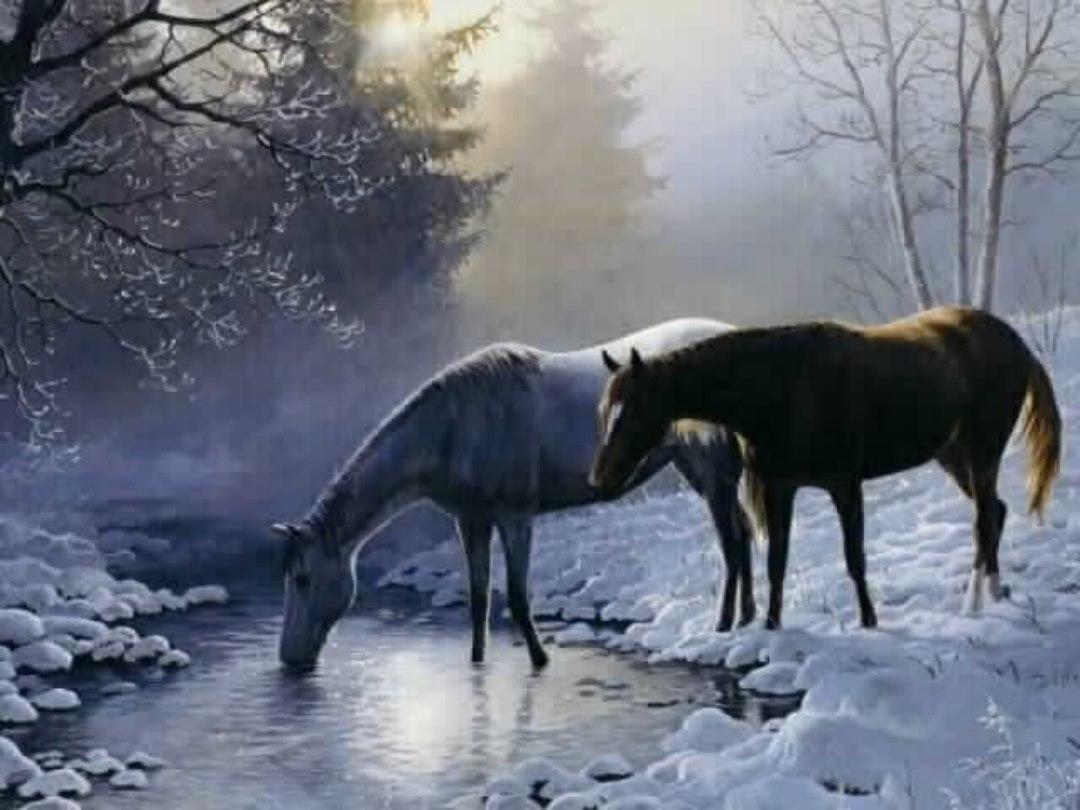 Horse Wallpaper Hd Free Download Fond D Ecran Chevaux 1893011