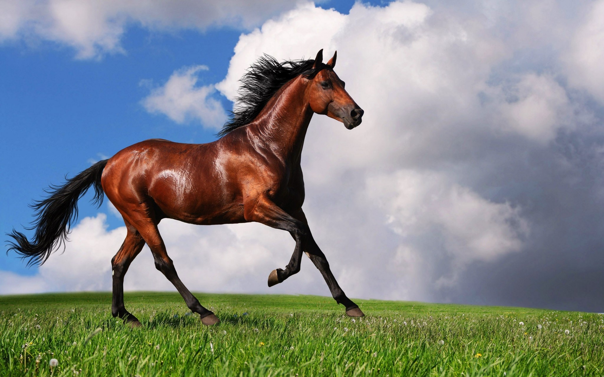 Horse Background Wallpaper For Computer Free Free Horse