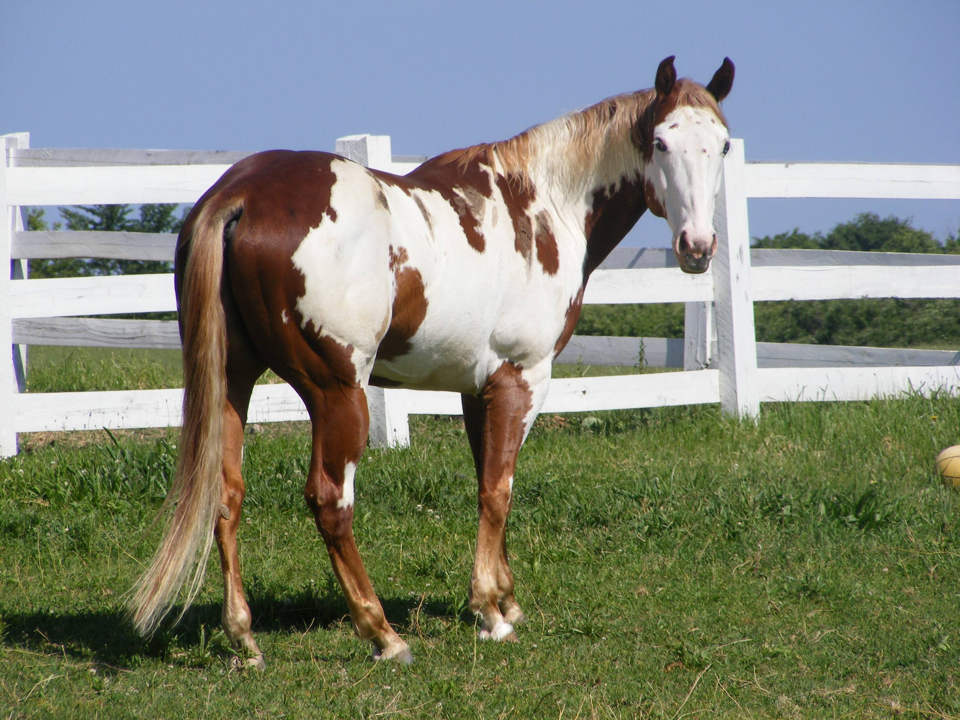 Paint Horse Background Hd Background Horse Beach 1893194 Hd