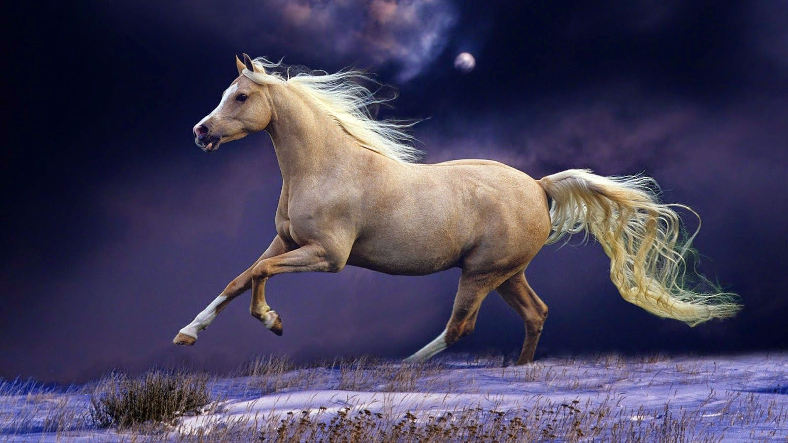Red Horse Wallpaper Widescreen Hd Free Download Horse