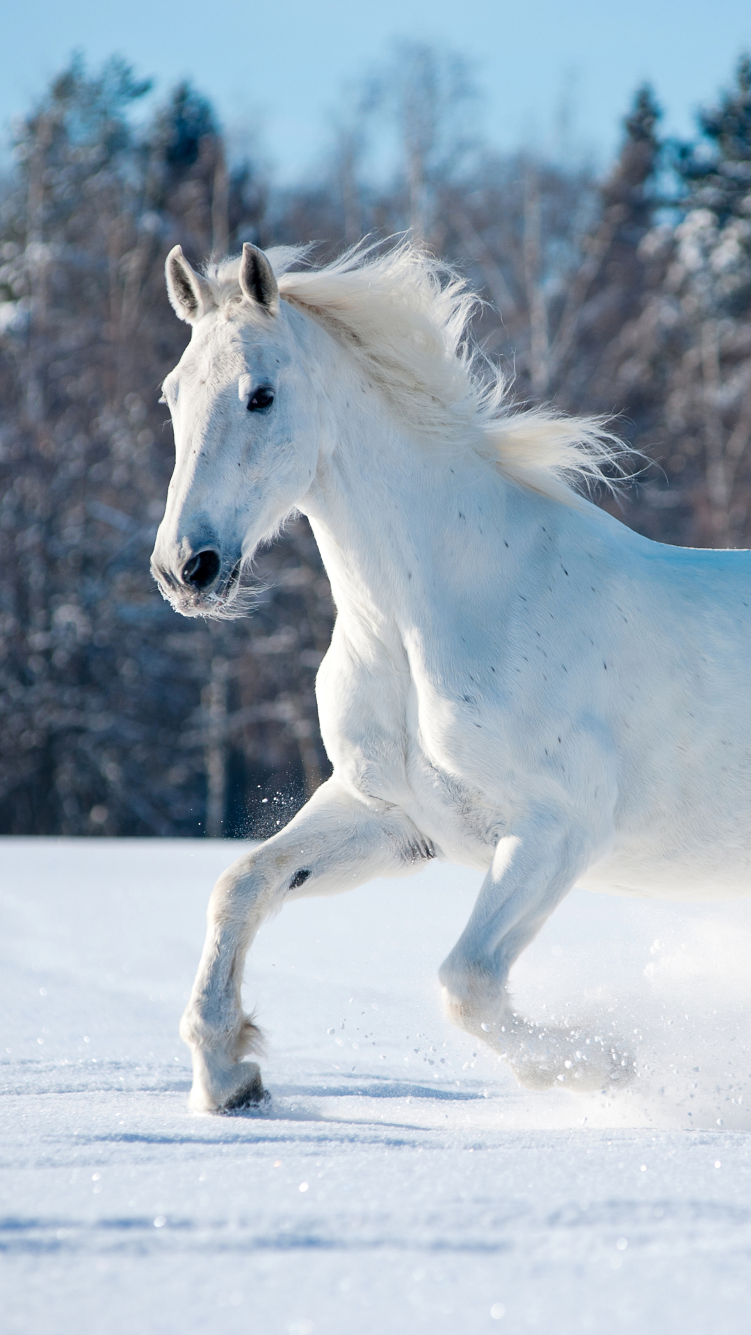 A White Horse Running Through The Snow White Horse Wallpaper For Mobile 1893716 Hd Wallpaper Backgrounds Download