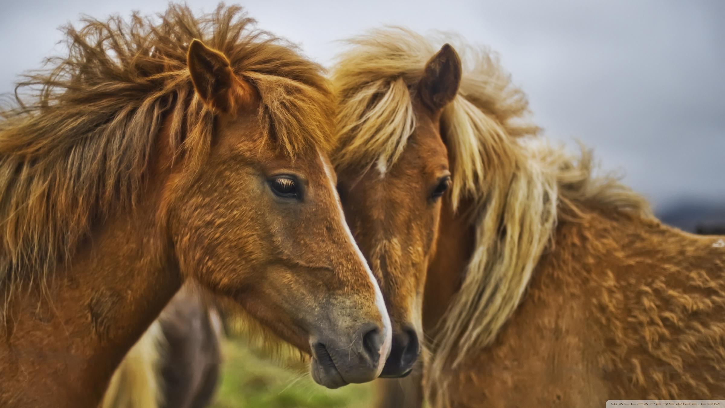 Beautiful Horses Wallpaper Beautiful Horses 4k Hd Beautiful Horses Images Hd 1893743 Hd Wallpaper Backgrounds Download