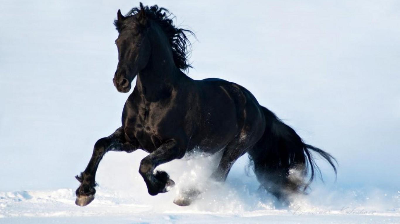 Black Horse Running In Snow 1893848 Hd Wallpaper
