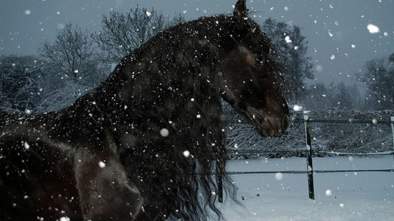 Horse Snow Beauty Storm Black Free Wallpaper With Horses