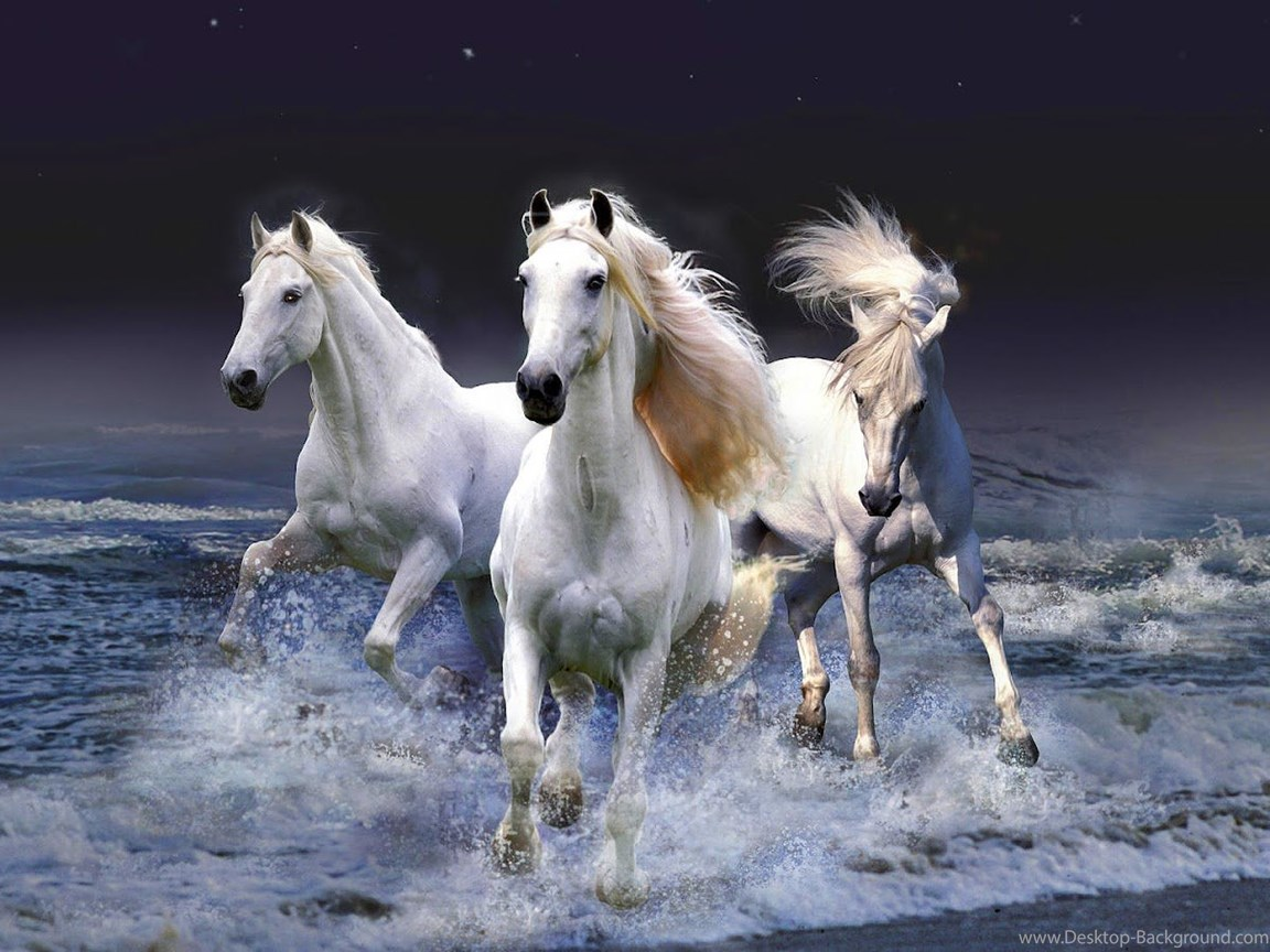Seven Running Horse Wallpaper Find Hd Wallpapers For 3d Beautiful White Horse 1893982 Hd Wallpaper Backgrounds Download