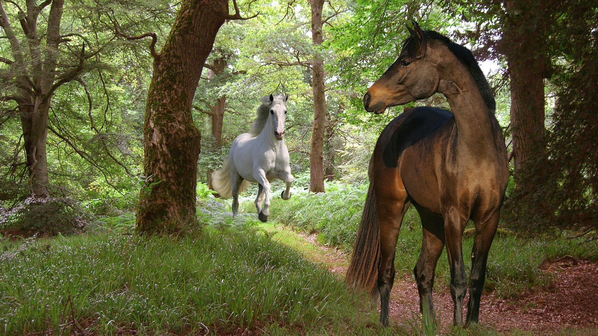 Most Beautiful Horses Wallpapers And Images Wallpapers, - Two Horses In A Forest , HD Wallpaper & Backgrounds