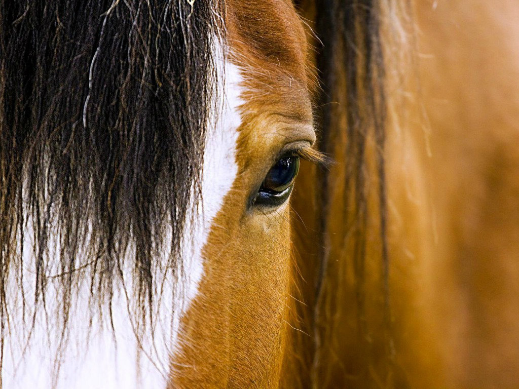 Beautiful Horse Wallpapers Close Up Photos Of Horses 1894102 Hd Wallpaper Backgrounds Download