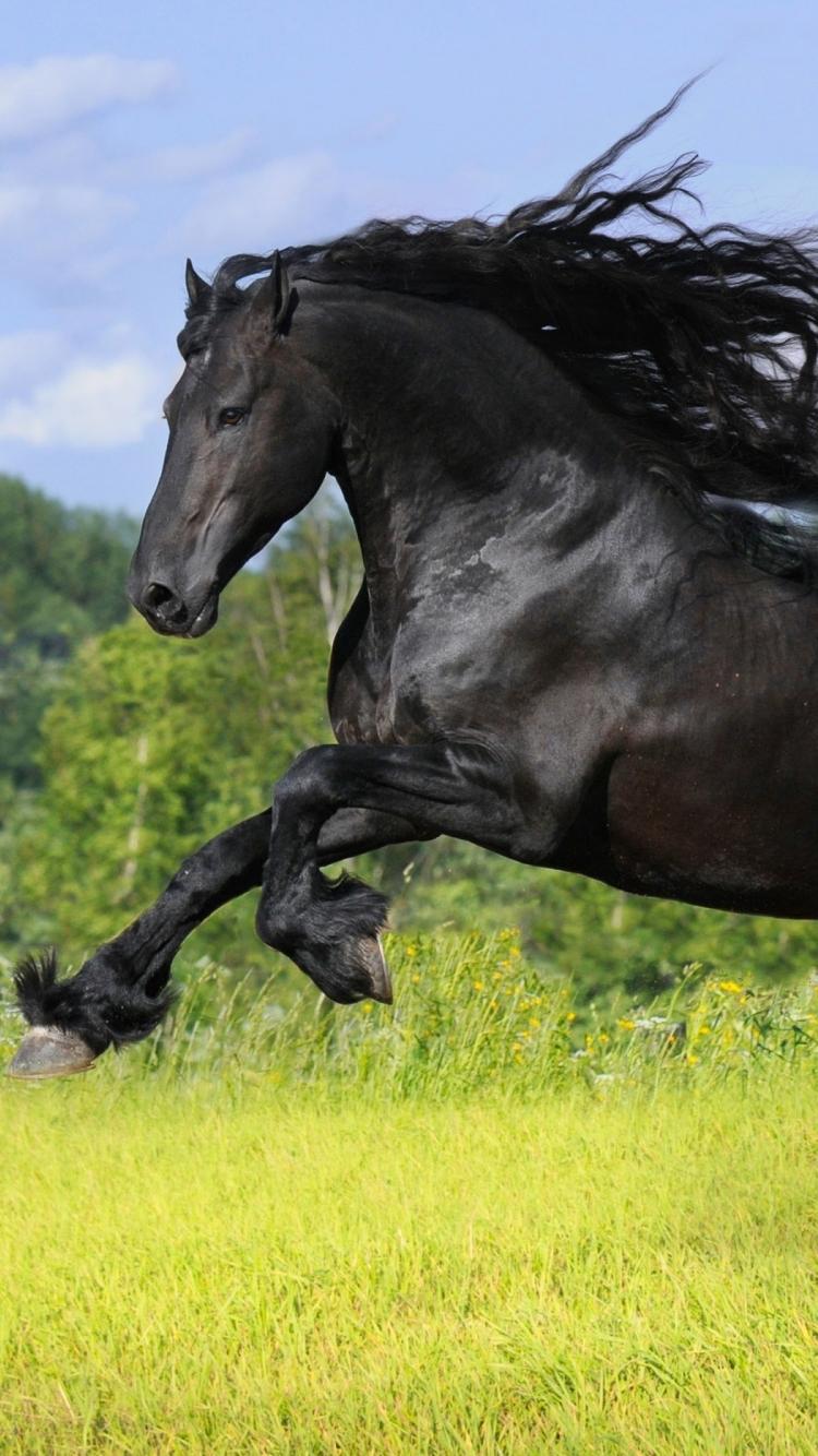 Mobile Wallpaper Black Stallion Horse 1894222 Hd Wallpaper Backgrounds Download