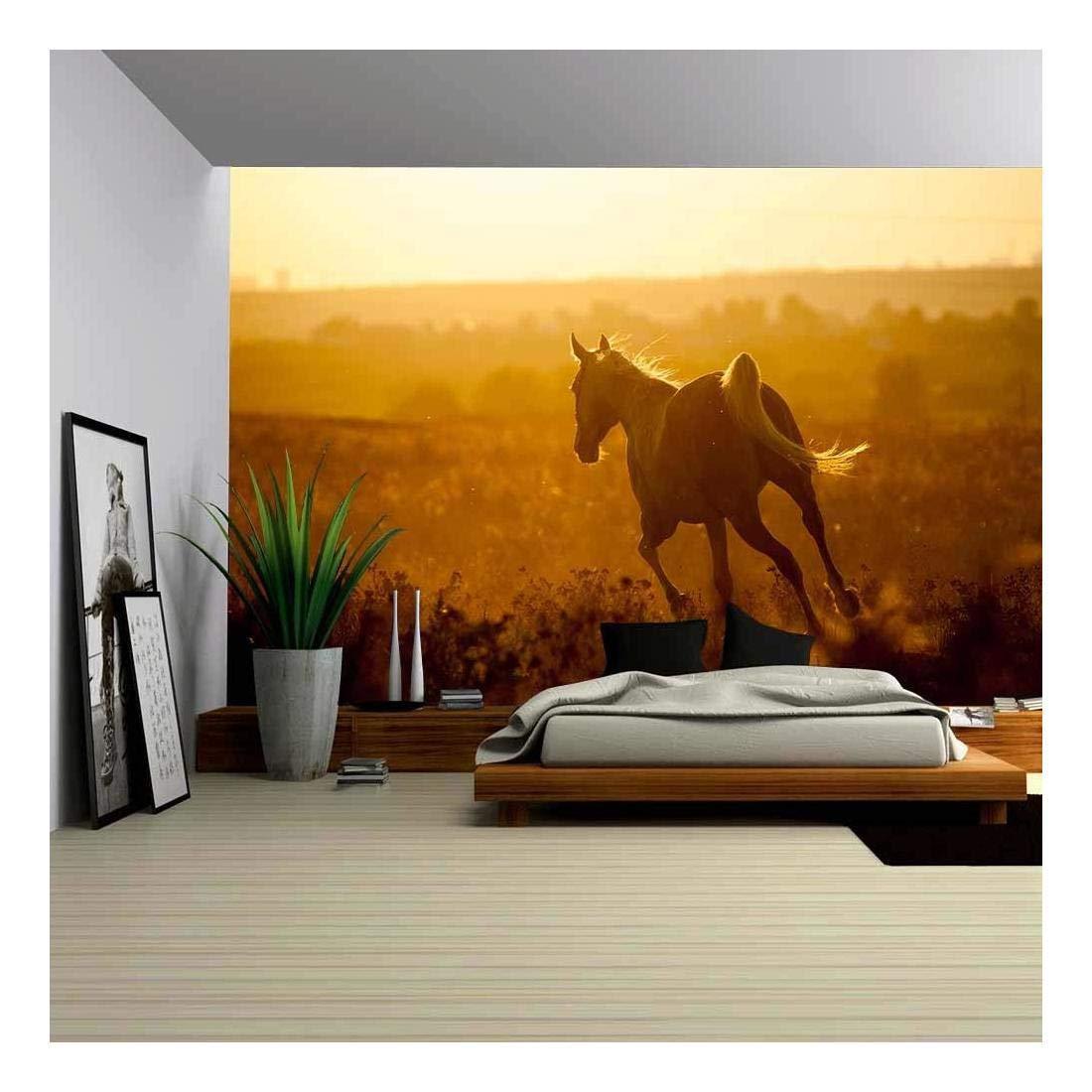Arabian Horse On Sunset Frankfurt Am Main 1894431 Hd