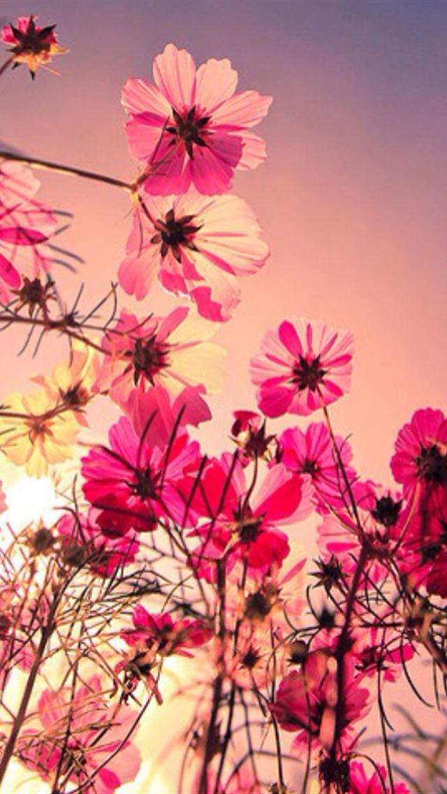 Flower Iphone Wallpaper Pinterest - Flower Wallpapers For Iphone , HD Wallpaper & Backgrounds