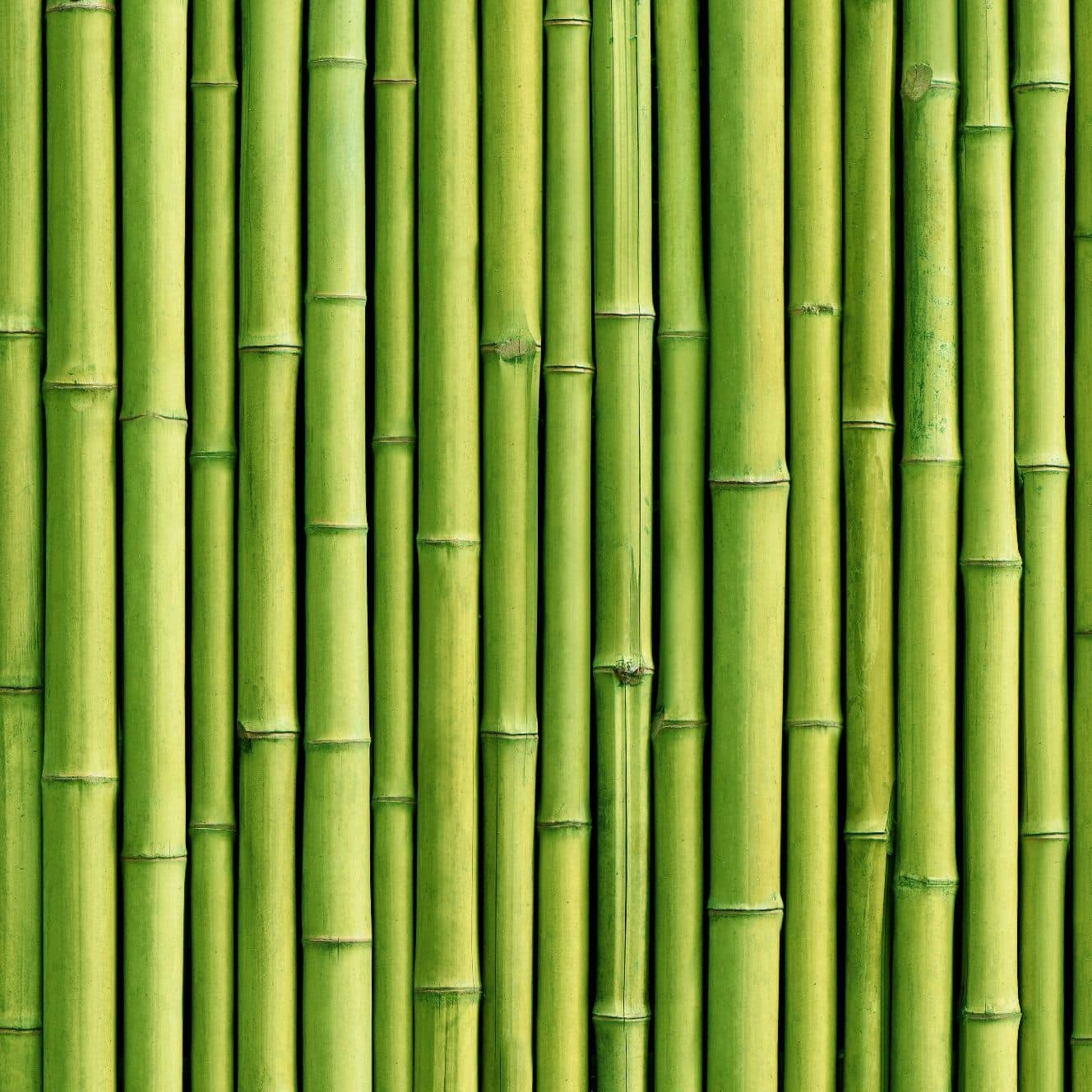 189 1896326 contemporary wallpaper vinyl nature pattern 3d nature bamboo