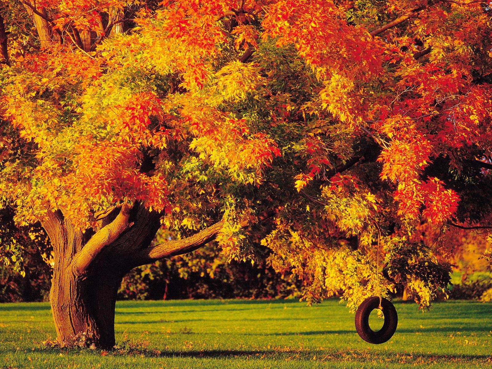 High Resolution Autumn Backgrounds 1901562 Hd Wallpaper