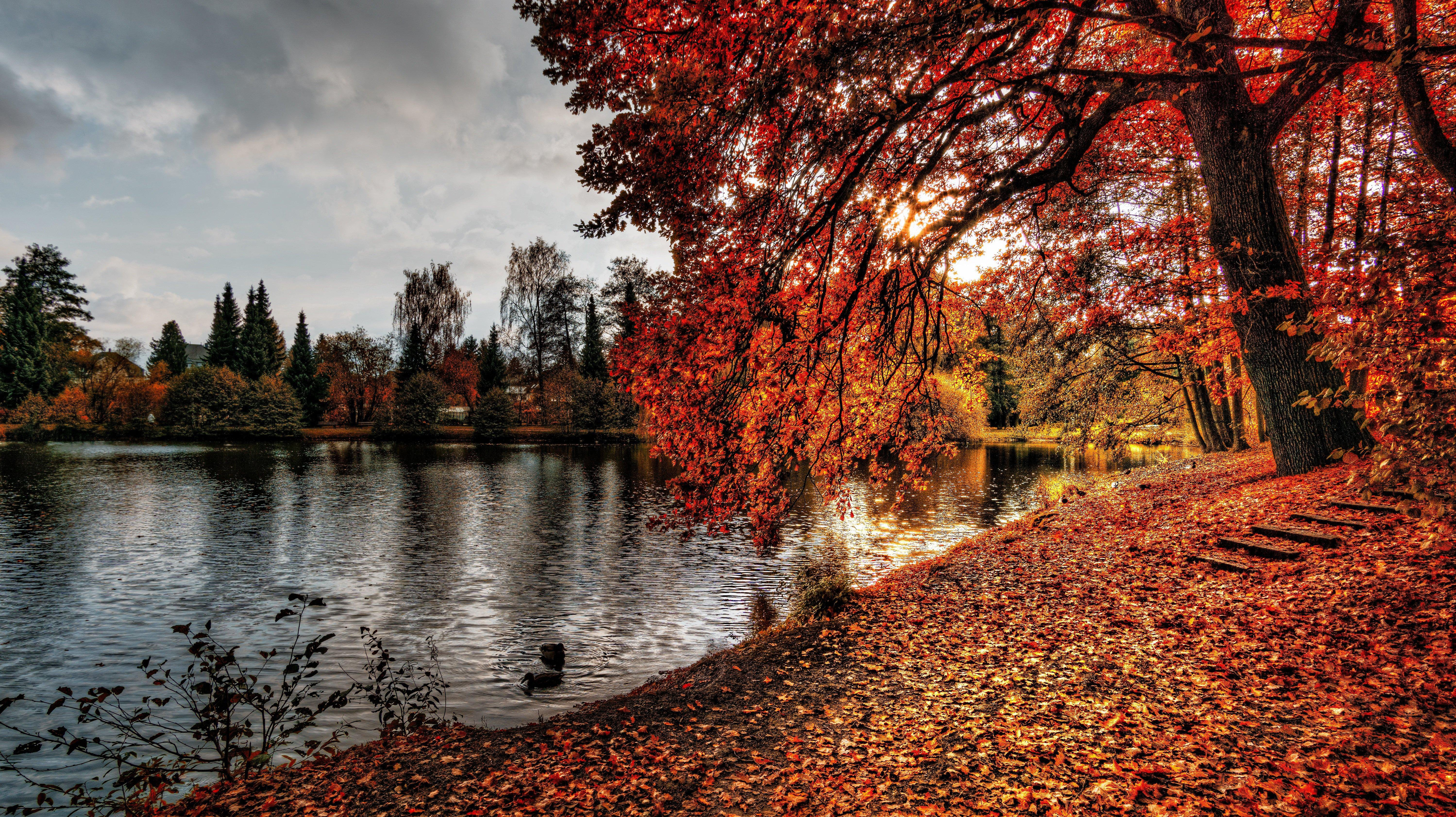 Hello Autumn Leaves Fall Seasons Wallpaper For Phone Nature Hd 1902281 Hd Wallpaper Backgrounds Download