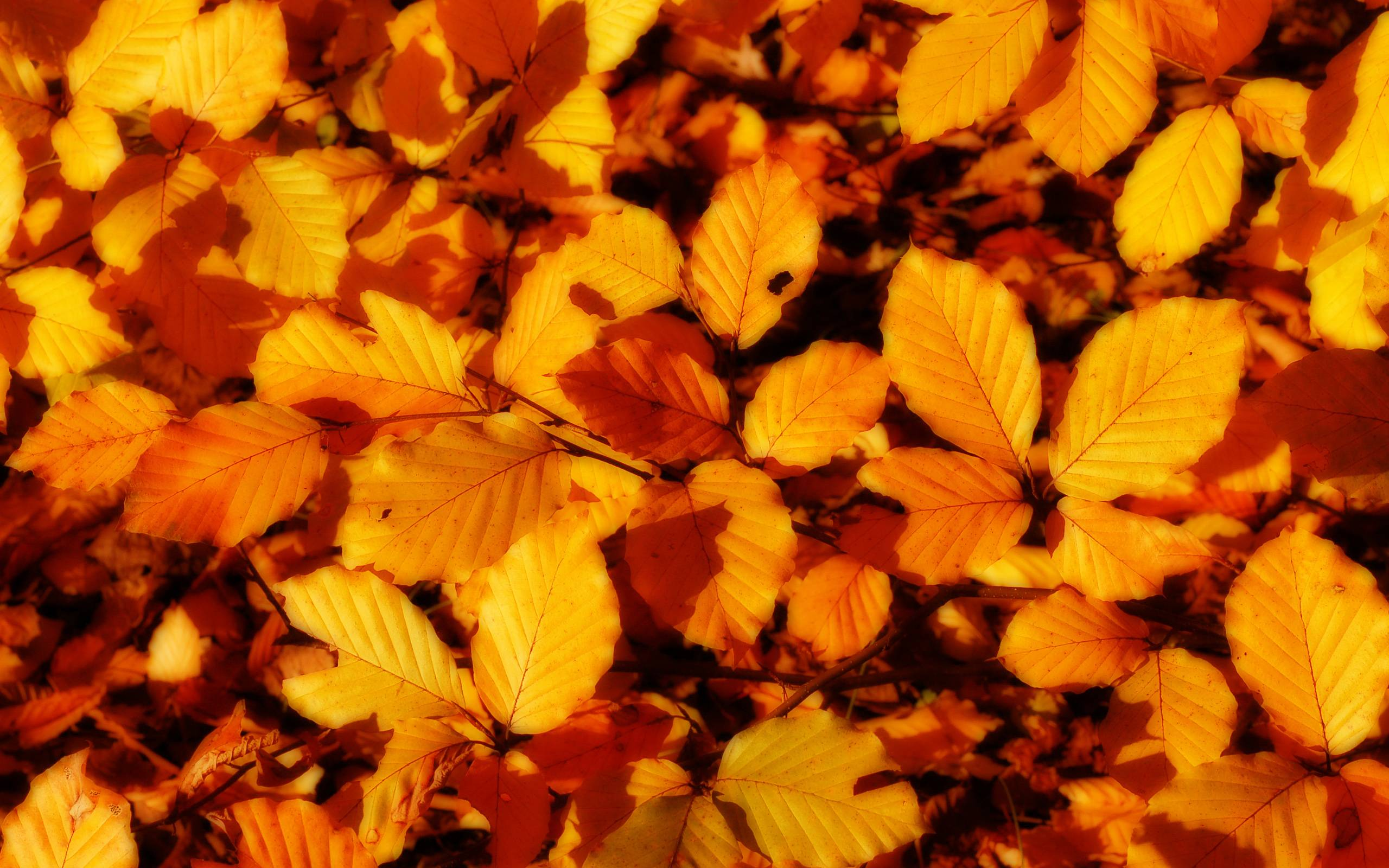 Autumn Leaves Wallpapers Autumn Fall Leaves Hd 1902505