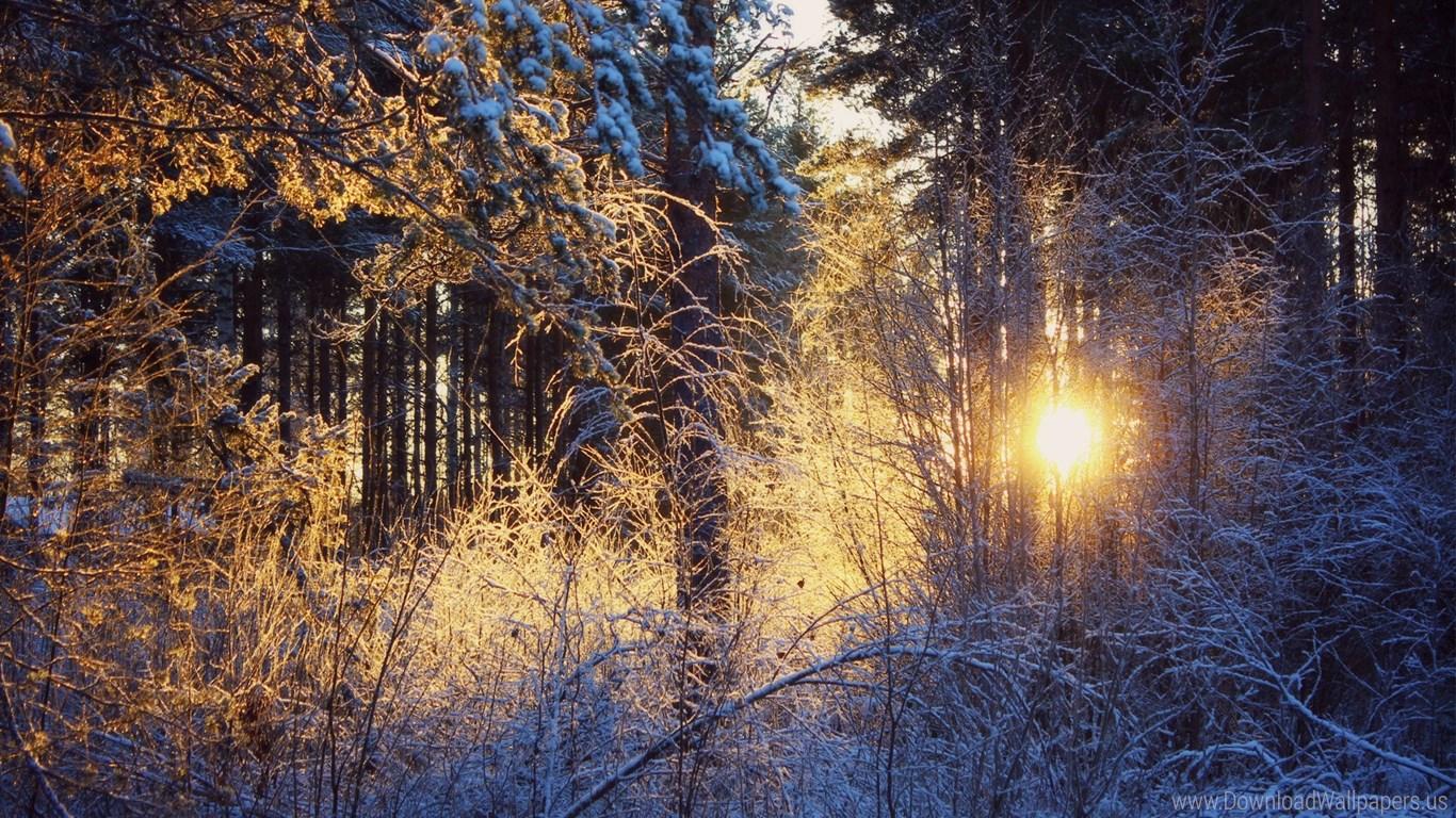 Winter Mystic 1902722 Hd Wallpaper Backgrounds Download