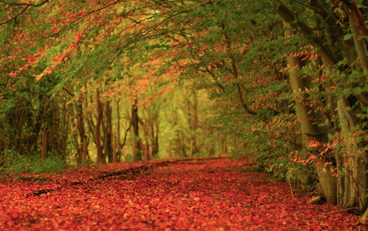 Originalwide Autumn Leaves Red Carpet Wallpapers