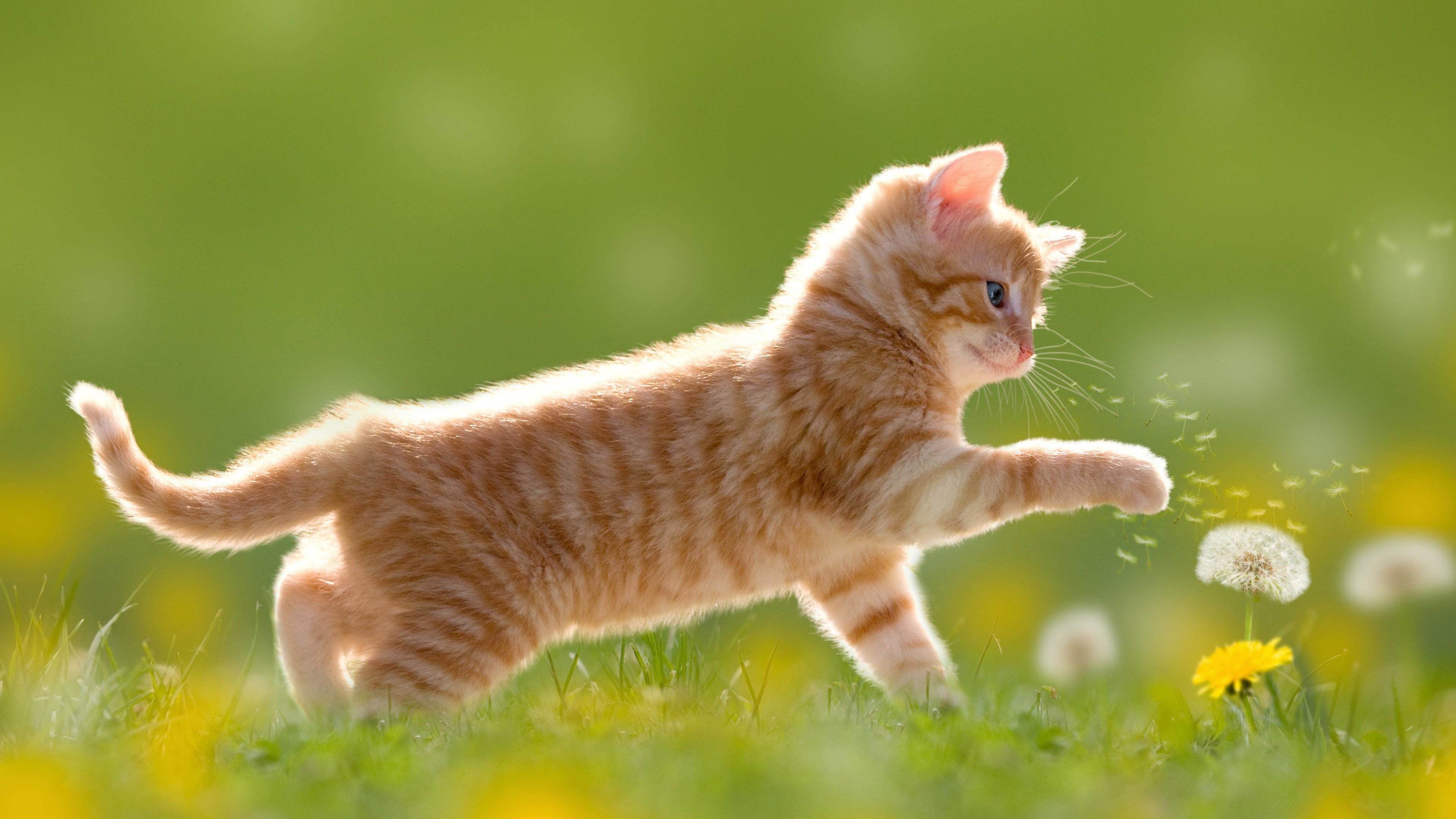1920x1080, Kitty Play - Kitten Playing , HD Wallpaper & Backgrounds
