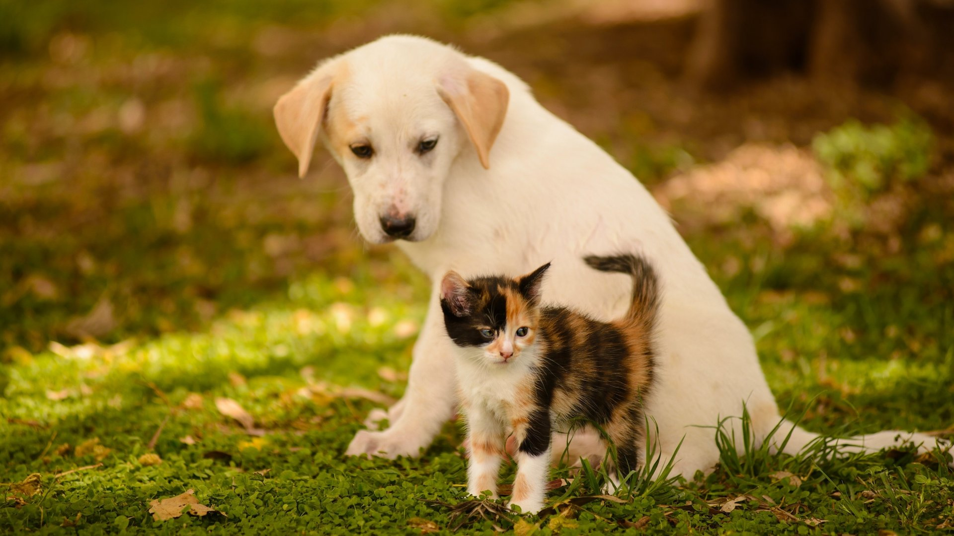 Cute Dog And Cat Wallpaper Pixelstalknet Dogs And Cats Hd