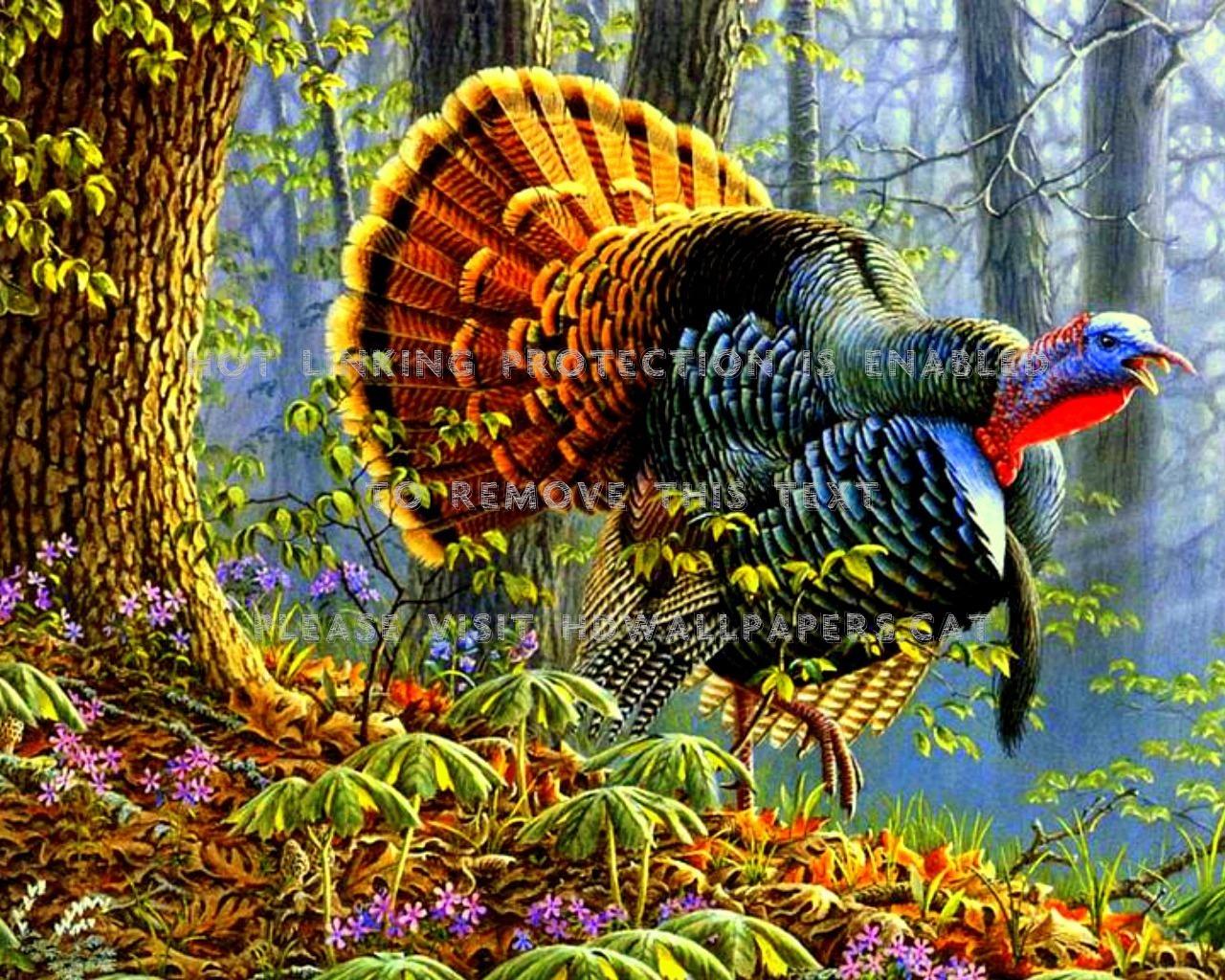 Turkey Bird , HD Wallpaper & Backgrounds