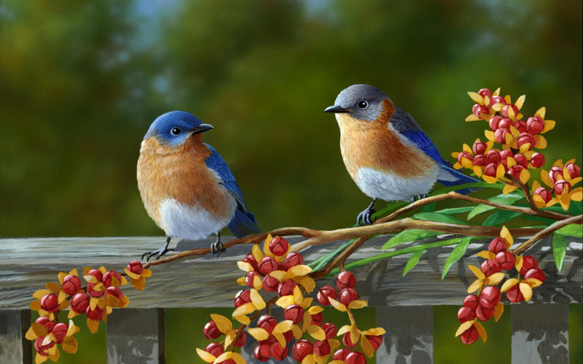 Full Hd Beautiful Birds 1915748 Hd Wallpaper Backgrounds