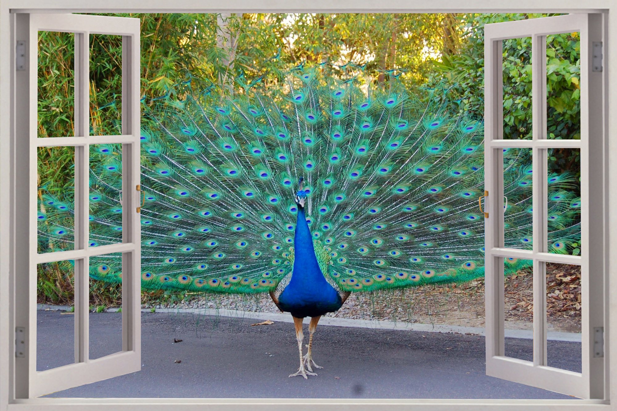 Window Beautiful Peacock View Wall Stickers Mural Art - Pasadena Peacocks , HD Wallpaper & Backgrounds