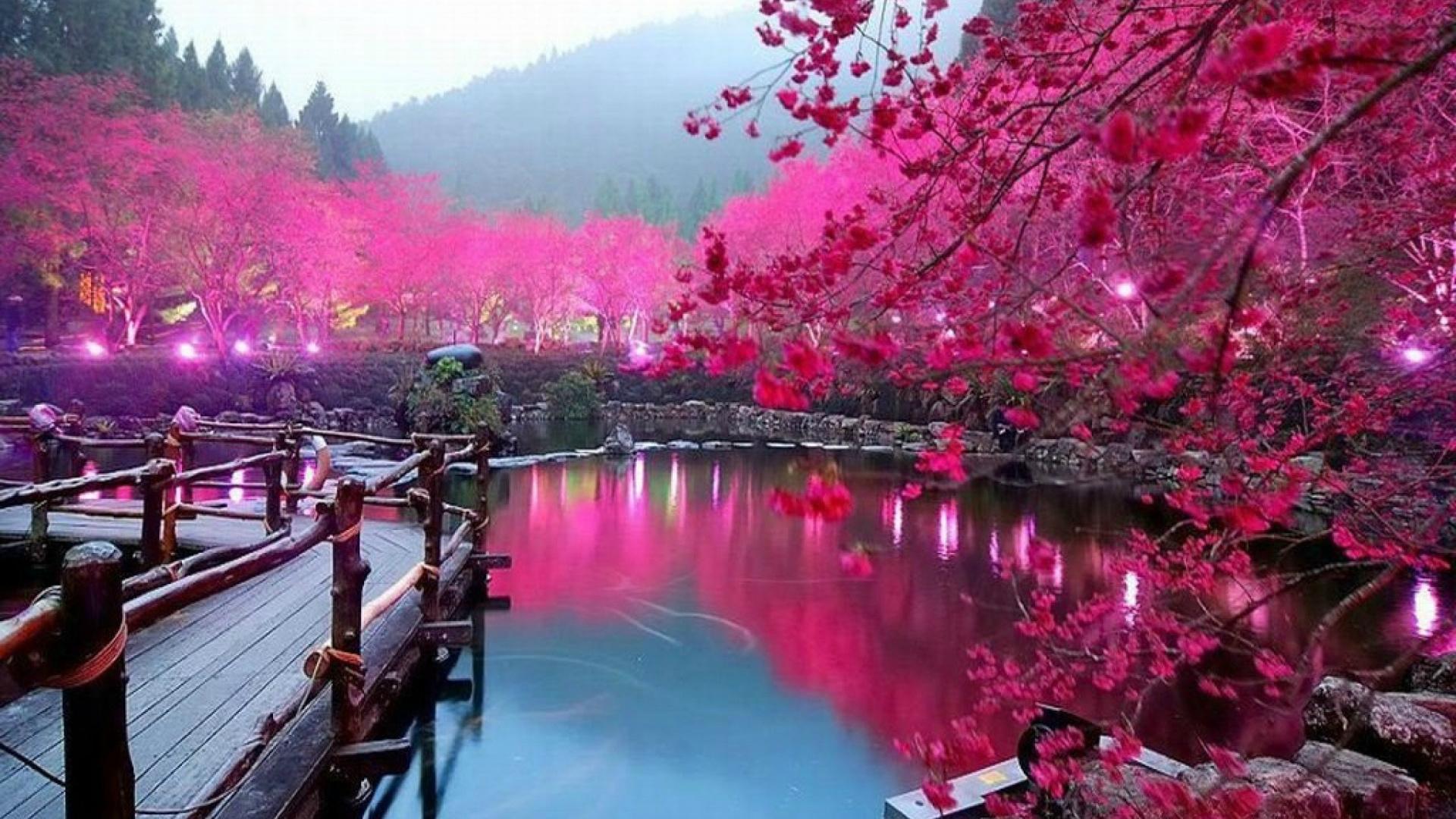 Travel, Reflection, Flower, Hanami, Cherry Blossom - Cherry Blossom Lake Sakura Japan , HD Wallpaper & Backgrounds