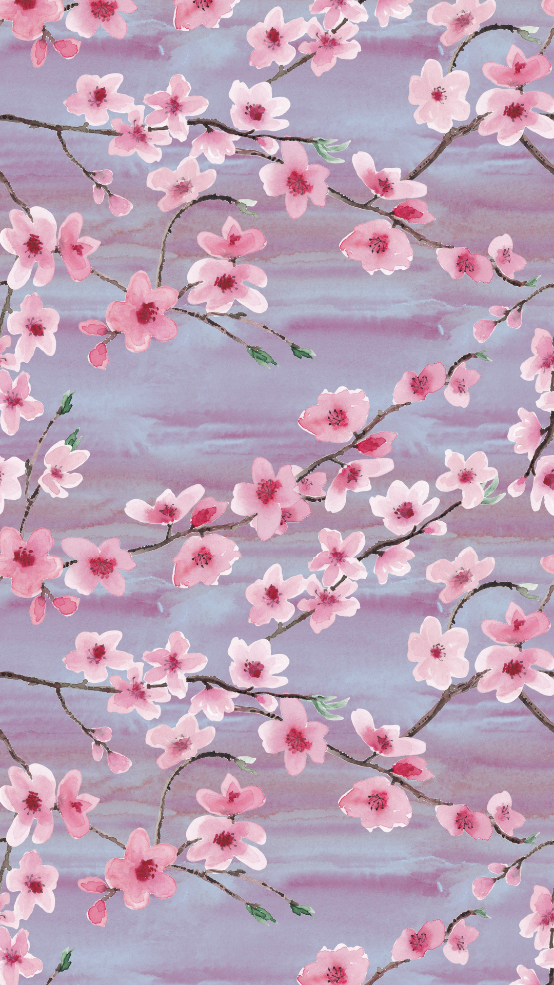 Click To Download Cherry Blossoms With Blue Background Cherry