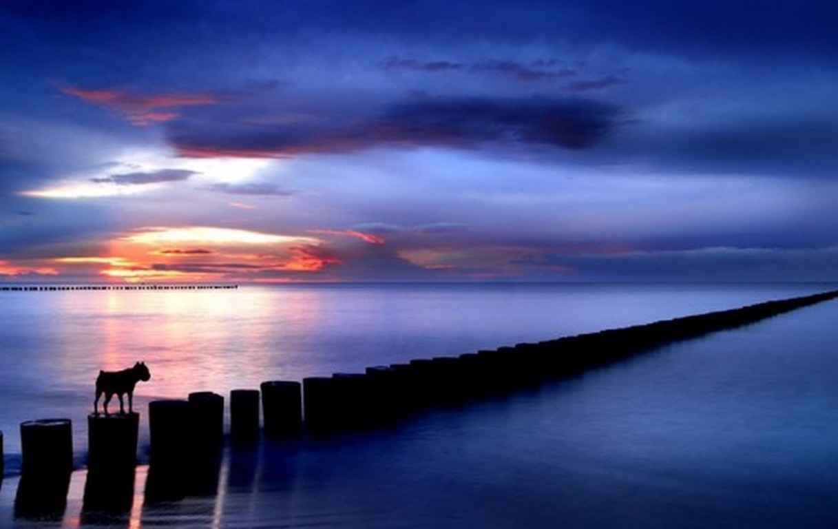 Lost Night Sunset Sea Dog Large Beautiful Pictures - Sunset , HD Wallpaper & Backgrounds