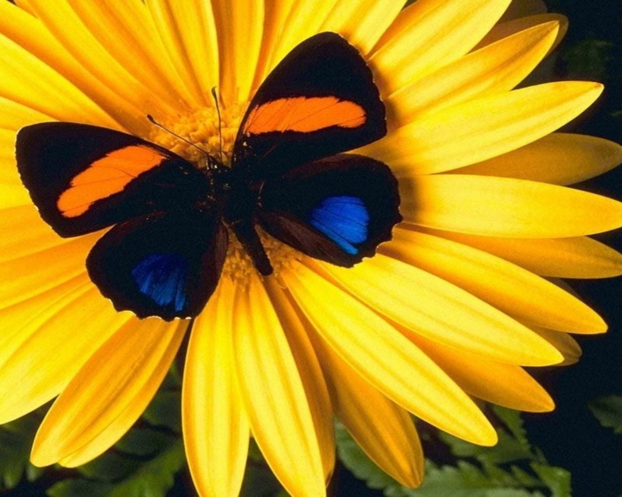 Butterfly Sitting On A Flower , HD Wallpaper & Backgrounds