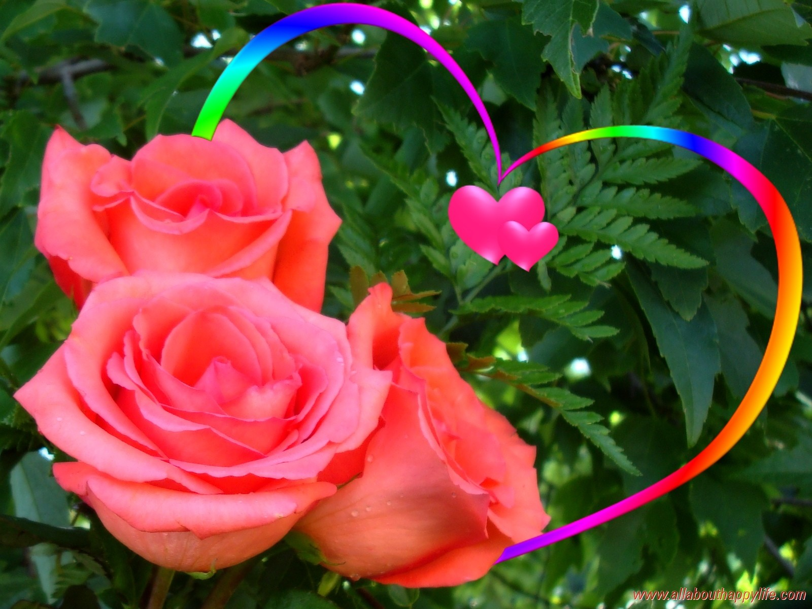 Love Rainbow Heart Colored Beautiful Leaves Roses Green - Download Beautiful Love Flowers , HD Wallpaper & Backgrounds