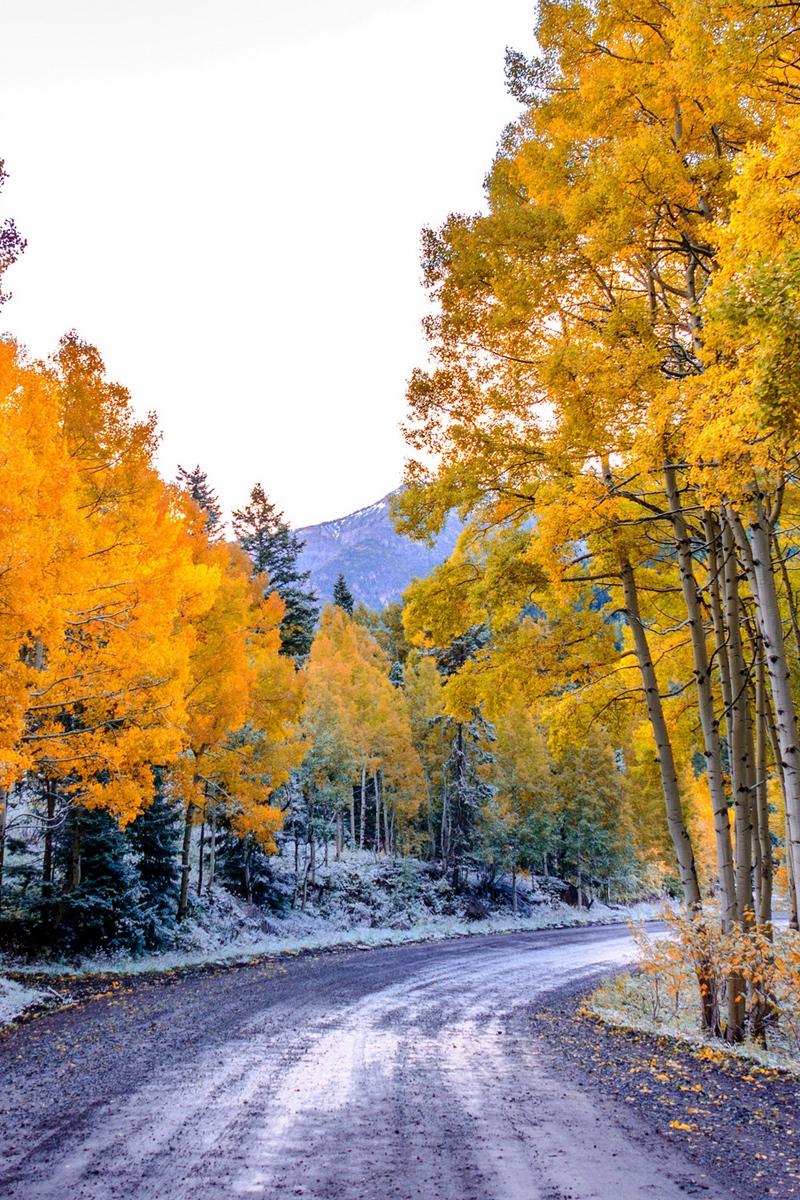 Wallpaper Aspen, Colorado, Usa, Trees, Fall, Twist - Aspen Trees Background Hd , HD Wallpaper & Backgrounds