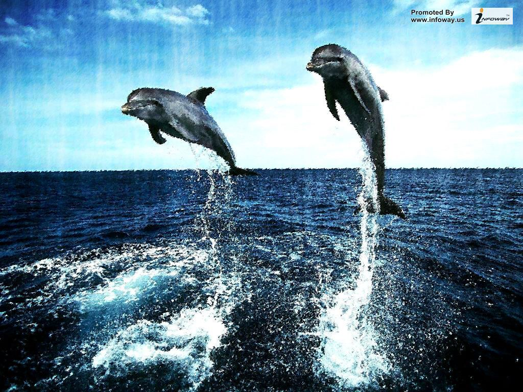 Hd Wallpapers Beautiful Fish Desktop Ocean Life Dolphin Kartinki