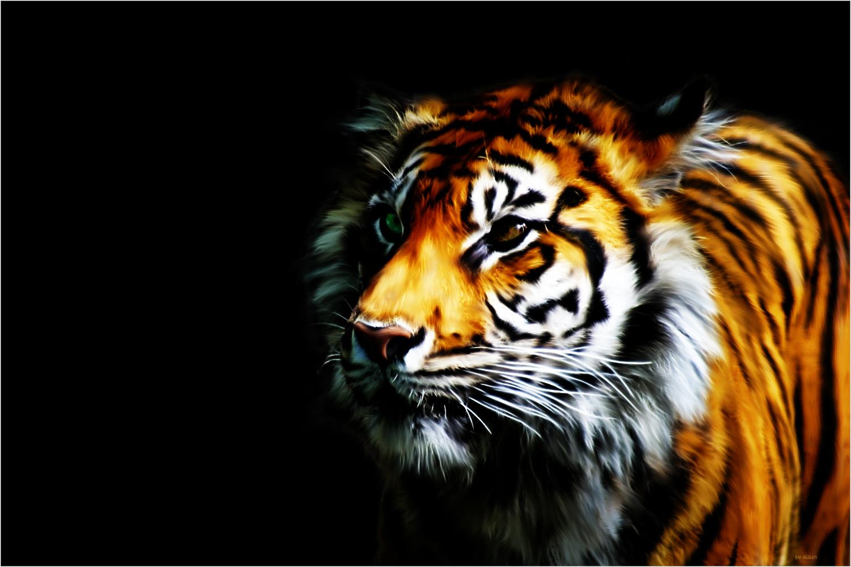 Bengal Tiger Sourav Ganguly , HD Wallpaper & Backgrounds