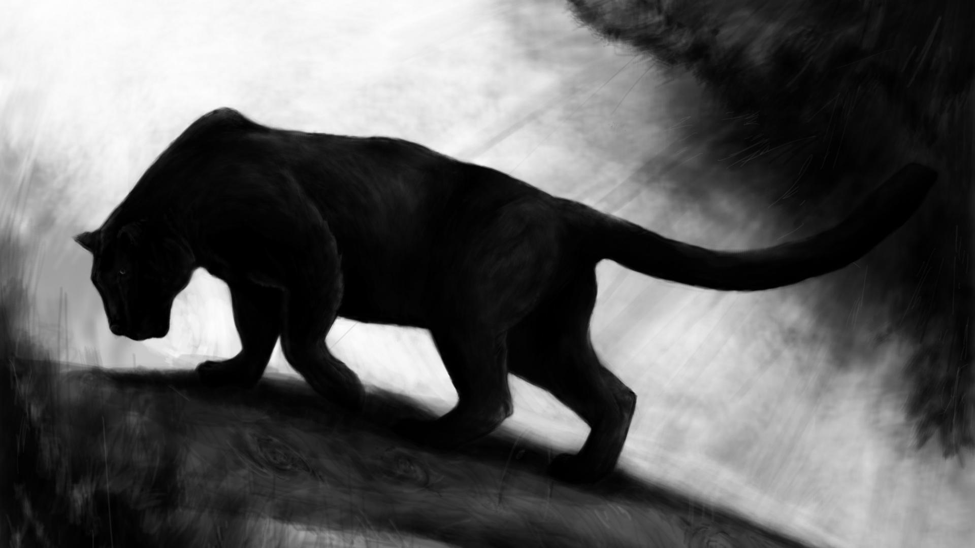 Black Panther Wallpaper Animal 1933516 Hd Wallpaper