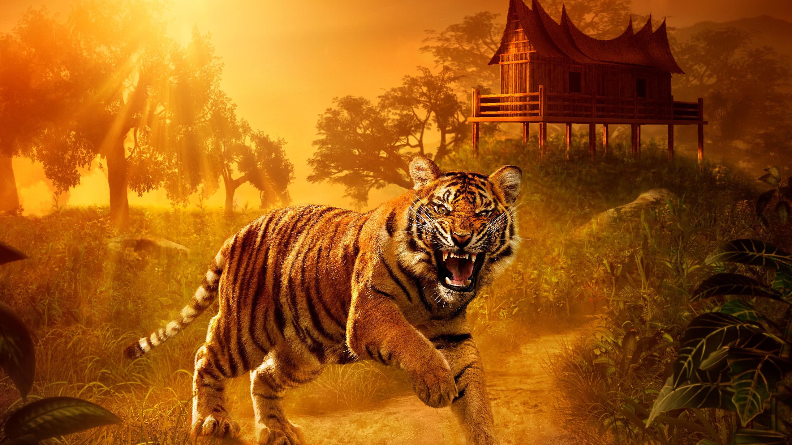 Angry Tiger Wqhd 1440p Wallpaper Angry Wallpaper Tiger
