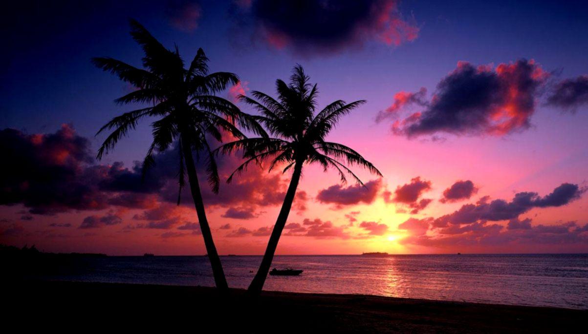 View Original Size - Palm Tree Sunset , HD Wallpaper & Backgrounds