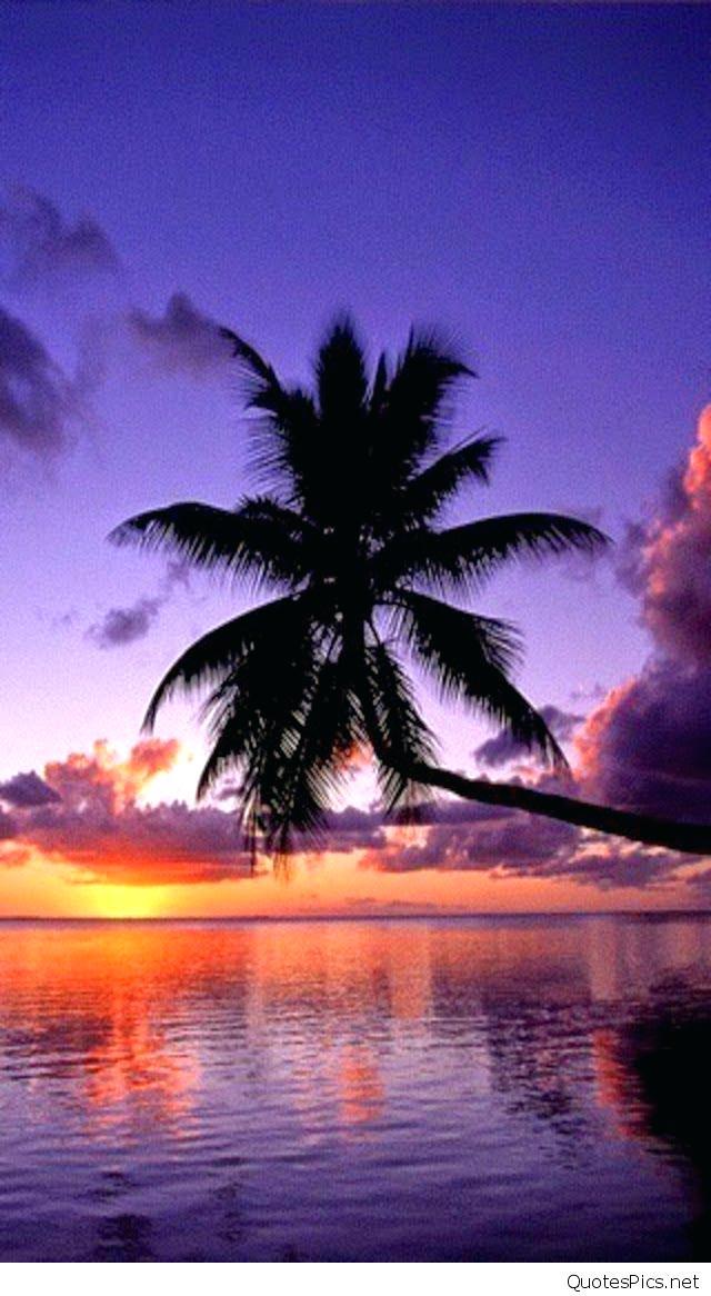Magenta Palm Beach Sunset Wallpaper Beach Sunset Wallpaper - Palm Tree Facebook Cover , HD Wallpaper & Backgrounds