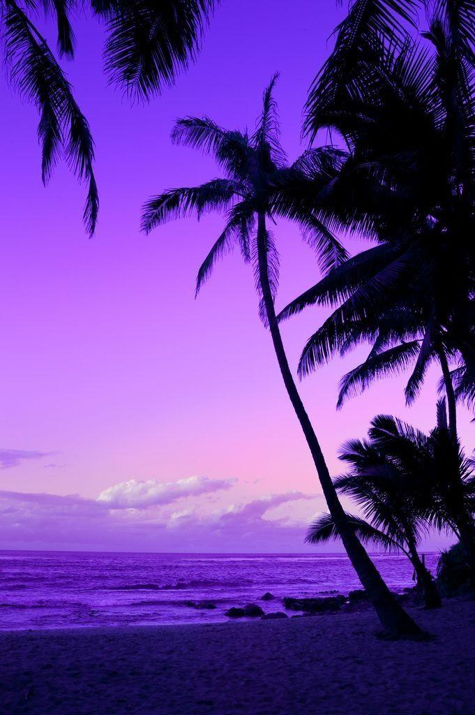 Purple Sunset Wallpaper - Palm Trees Sunset Purple , HD Wallpaper & Backgrounds