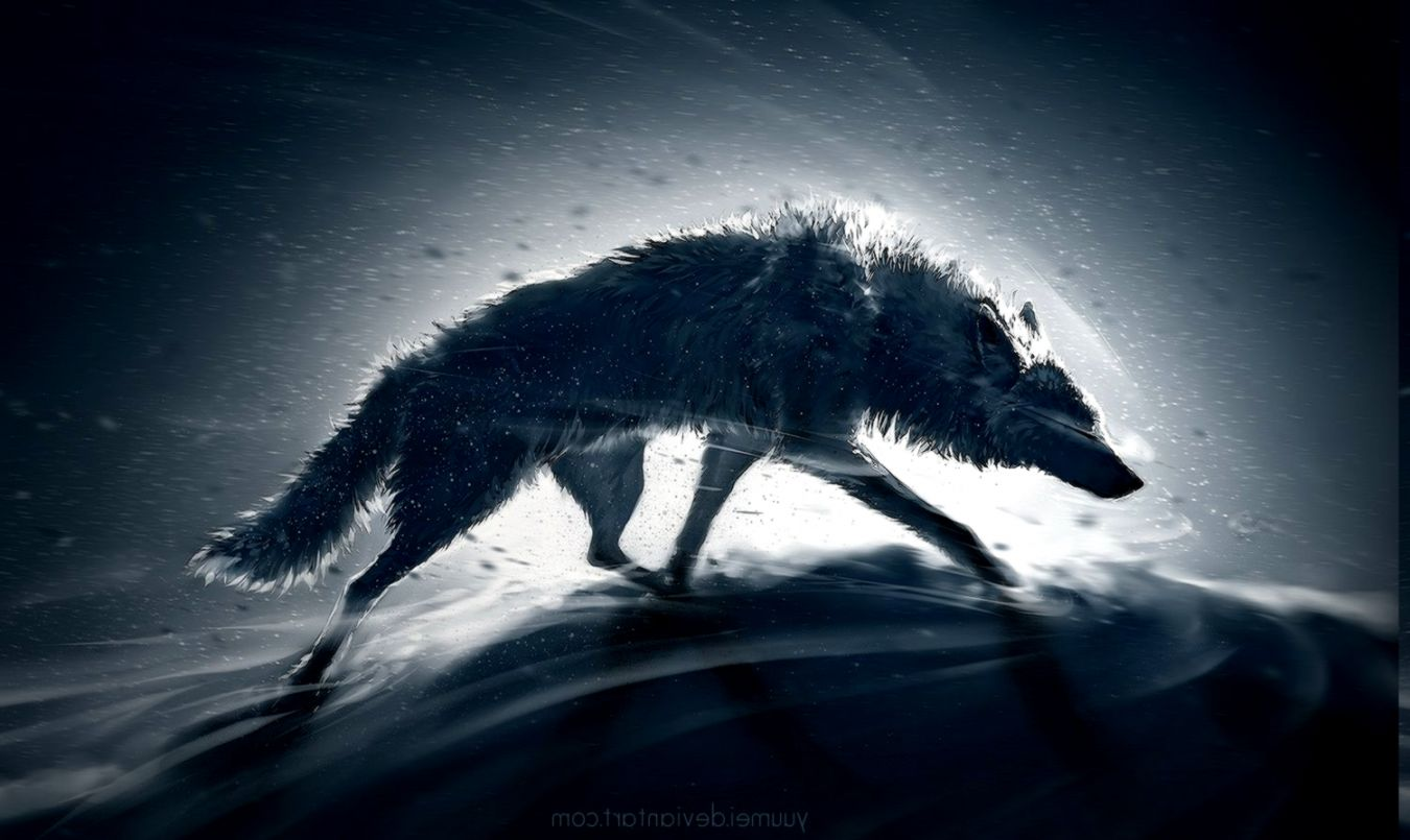 195 1951588 animals wolf wallpapers hd desktop and mobile backgrounds